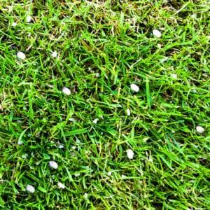 fertilizer on lawn